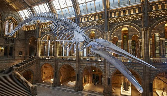 Fotografia-Museo-Historia-Natural-Londres_10441621