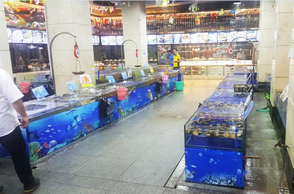Tranquilo, puedes pasar al acuario y elegir tu molusco favorito