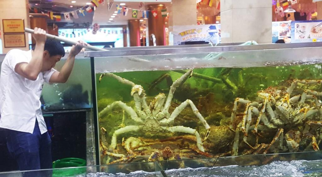 ¿A quién le apetece una mariscada con un cangrejo gigante?