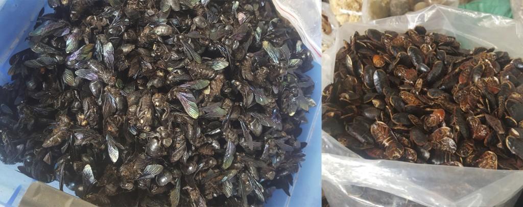 cucarachas y moscas